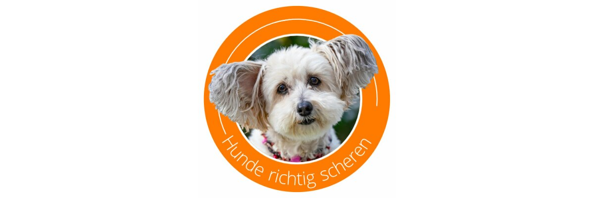 Hunde selber scheren - Ein Leitfaden - Hunde selber scheren - Unser Leitfaden für die Fellpflege