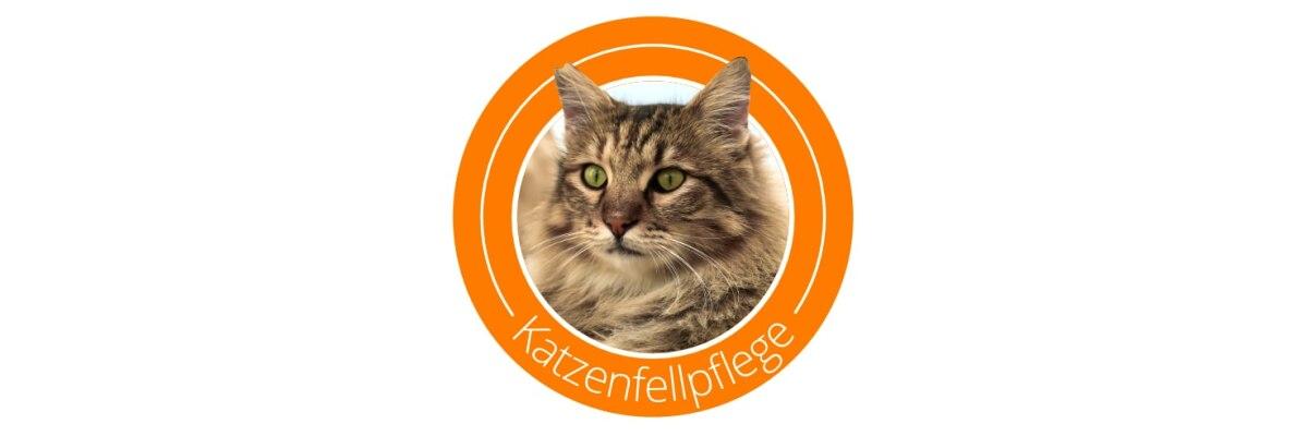 Wenn die Fellpflege bei Katzen nötig wird - Fellpflege bei Katzen - Tipps & Tricks rund um den Katzenpelz